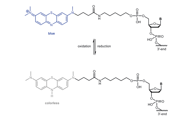 Oxidised and reduced form of  Anthraquinone