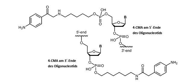 4-Carboxymethylaniline (4-CMA) at the 3´- or 5´-end of an oligonucleotide