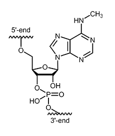 N6-methyl-adenosine (m6A)