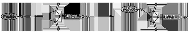 Maleimide Thiol Conjugation Thiol-maleimide Linkage